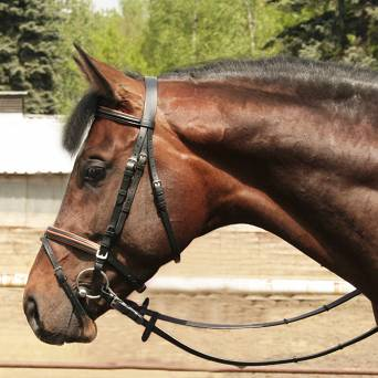 23 DAW-MAG Padded bridle black with edging