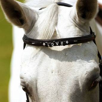 NORTON Leather Browband  / 30449
