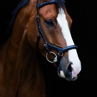 "HORSEWARE  ""RAMBO MICKLEM Deluxe Competition"" bridle"