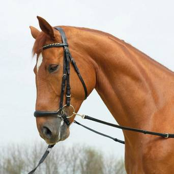 Side-Reins BUSSE BASIC-STARR / 128020