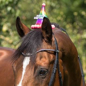 QHP Birthday hat horse / 8454