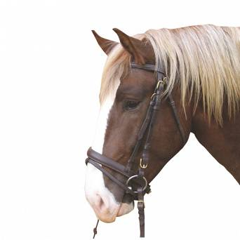 Bridle for cold-blooded horse