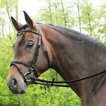 21 DAW-MAG Plain bridle with flash noseband
